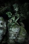 "untitled, series ""night landscape"""