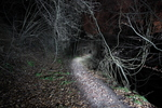 "untitled, series""Night Way 2012"""