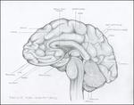 Brain I