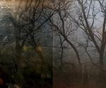 Evening Treeline