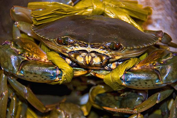 crabtied